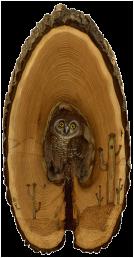 Elf-Owl